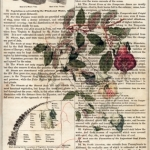 Cup-ad-Saucer Vine on Old Page