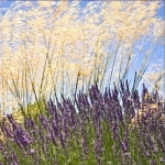 Lavender and Grass