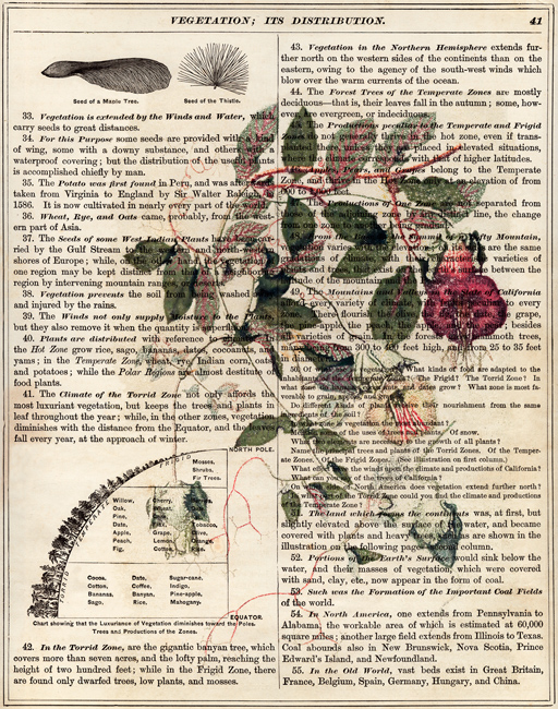 Cup-and-Saucer Vine on Old Page