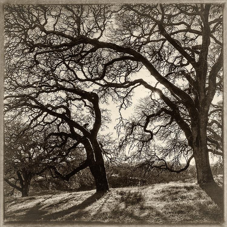 Oak Dance 2