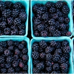 Blackberries on Blue