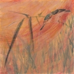 Japanese Kingfisher