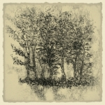 Trees in Ink 2