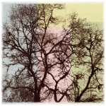 Trees in Ink 5