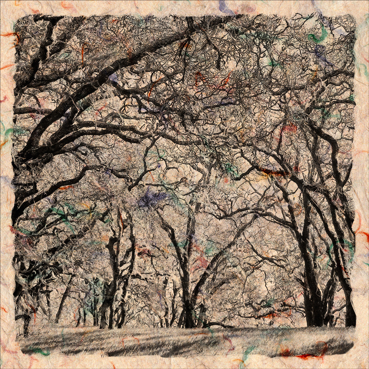 Bare Trees on Colors